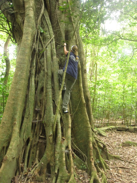 Me, climbing a tree (Ficus tree?) in Selva Negra
